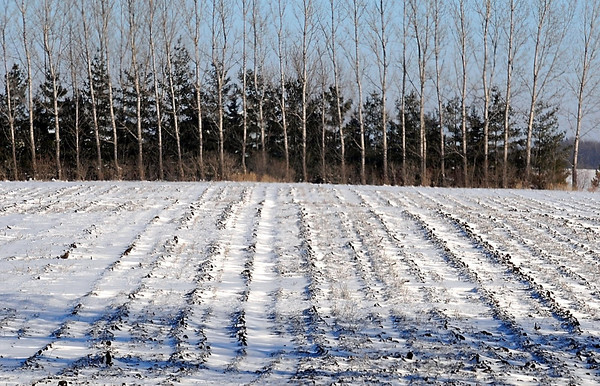 Fresh snow covers a plowed field south of Mankato.