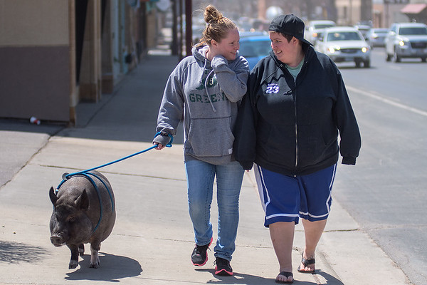 Maddie Exline (center) and Sanjay Roozen talk as they walk Lucy, a three-year old pet pig along Riverfront Drive on Friday. Exline said they were taking Lucy to Mom and Pop's for ice cream. Exline worked with the City of Mankato to maintain possession of her therapy pet pig. Photo by Jackson Forderer