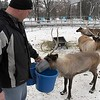 Kiwanis Holiday Lights reindeer 4