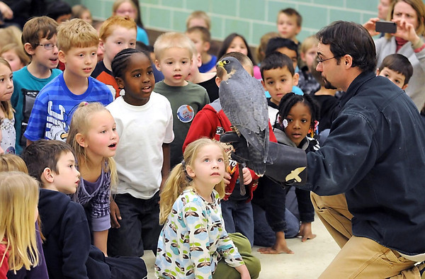First graders at South Elementary School in St. Peter are captivated by the University of Minnesota Raptor Center's Mike Billington and his peregrine falcon during a demonstration Friday.
