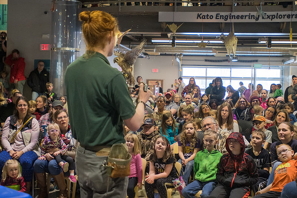 Ian Dorney with the Raptor Center talks about the bird he is holding in his hand, an American Kestrel, in front of a packed house at the Children's Museum of Southern Minnesota on Saturday. Staff at the museum said they had to turn people away to avoid going over fire capacity. <br /> Photo by Jackson Forderer