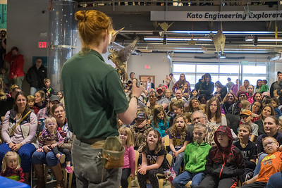 Ian Dorney with the Raptor Center talks about the bird he is holding in his hand, an American Kestrel, in front of a packed house at the Children's Museum of Southern Minnesota on Saturday. Staff at the museum said they had to turn people away to avoid going over fire capacity.  Photo by Jackson Forderer