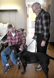Therapy dog 1