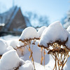 Snow photo package3_02-25
