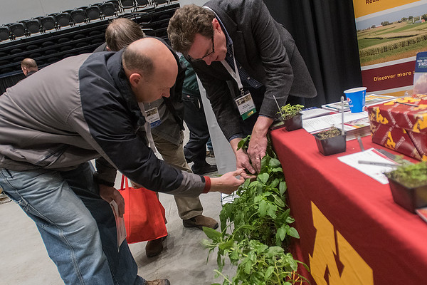 Dave Nicolai (right) from the University of Minnesota shows Jason Schanil from Hector some super weeds that were set up at the U of M's booth to help famers identify the different super weeds at the Ag Expo held on Wednesday. Photo by Jackson Forderer