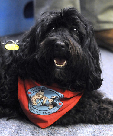 Pat Christman<br /> A therapy dog named Tuunaq looks around during Saturday's visit to the Children's Museum.