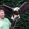 """Joe Krumrie from the National Eagle Center in Wabasha holds Angel, a 13-year-old bald eagle during a presentation Saturday at the Hubbard House. The presentation was part of the Blue Earth County Historical Society's """"Discover the Dakota"""" educational series celebrating Dakota Indian culture."""