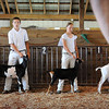 John Cross<br /> A judge scrutinizes youngsters and their goats  during the 4-H goat show at the Waseca County Fair.
