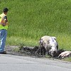 Hogs Highway Crash 3