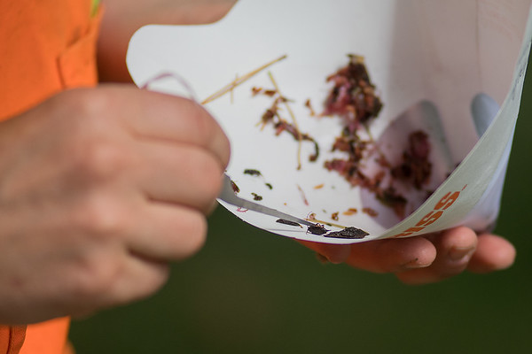 Angie Ambourn, an entomologist with the Department of Agriculture, inspects an insect caught in a trap at Sibley Park. In addition to trying to find invasive insects, Ambourn said she also documents species that haven't previously been identified in Minnesota. Photo by Jackson Forderer