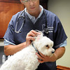 John Cross<br /> Troy Summers of Summers Ridge Veterinary Clinic in Janesville checks out a canine patient.