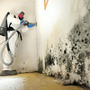 Tidy Clean's Michael Danley cuts off a portion of drywall covered in mold in a North Mankato basement. Photo by Pat Christman