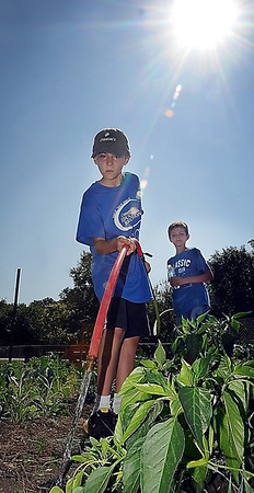 John Cross<br /> Andrew Birkmaier (front) and Riley Gunsolus water plants at the Blue Earth County Community Garden.