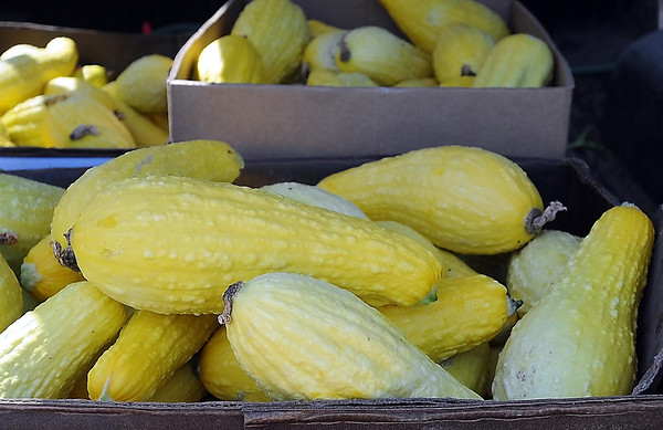 John Cross<br /> Encore members harvested squash from the Blue Earth Community Garden.