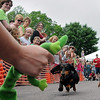 John Cross<br /> Marya Flynn's weiner dog, Gus, has his eye on the prize _ a favorite toy _ as he sprints to the Championship at the Weiner Dog Races that were part of Art Splash in North Mankato on Saturday.