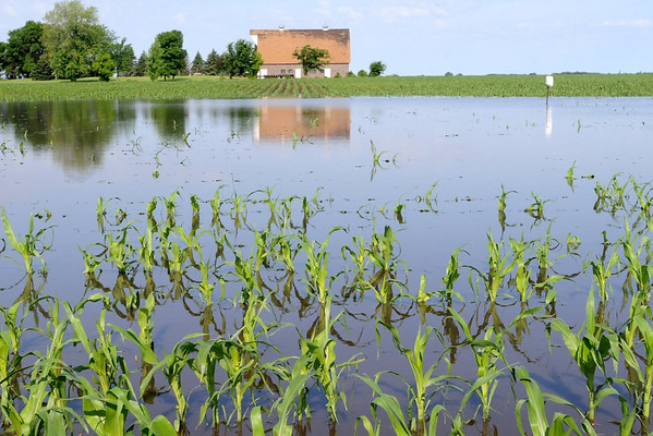 Monday night's storm left acres of farm fields like this one along Highway 22 south of Mankato flooded. Photo  by John Cross