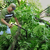 Gaylen Reding of Mapleton uses a handsaw to clear limbs from his yard on Tuesday following Monday's strong thunderstorm. Photo by John Cross
