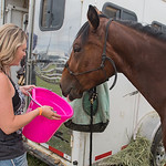 Paula Selly of Le Center looks into a nearly empty bucket after giving the horse Belize a drink after the Sheriff's Mounted Posse trail ride on Saturday. The annual ride benefits local youth ...