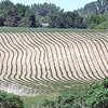 Dry crops