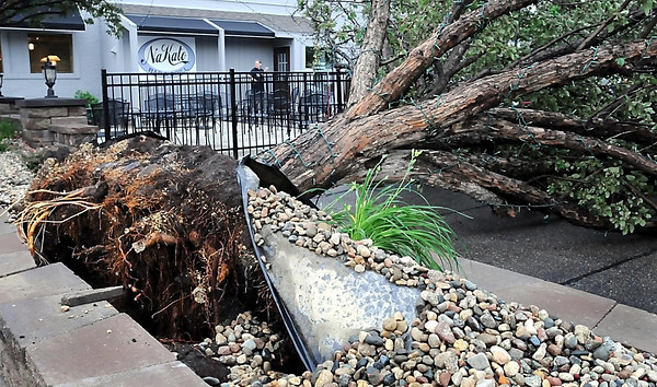 John Cross<br /> High winds during Friday's storm topped numerous trees including this one on Belgrade Avenue near the NaKato Bar & Grill.