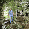 John Cross<br /> Thomas Holmes picks his way through a tangle of downed tree branches at his lower North Mankato home after a strong thunderstorm swept through the area early Friday morning.