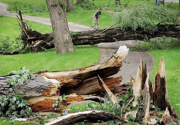 John Cross<br /> A youngster climbs atop one of several large cottonwood trees in Spring Lake Park toppled by high winds from a strong storm that swept across the area early on Friday.