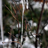 Water cascades down a melting icicle during Saturday's rain.