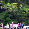 Runners in the 5k race leave the starting line during Saturday's 7 at 7 trail race.