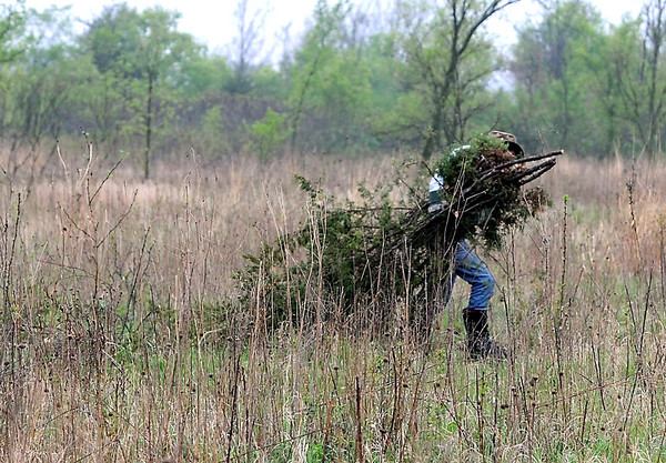A volunteer carries branches to a burn pile while working on a prairie restoration project near Judson Saturday.