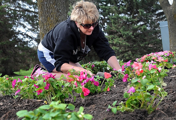 Joann Jaqua, from the Minnesota State University Foundation office, plants flowers on campus during the annual Campus Beautification Day Tuesday. Photo by Pat Christman