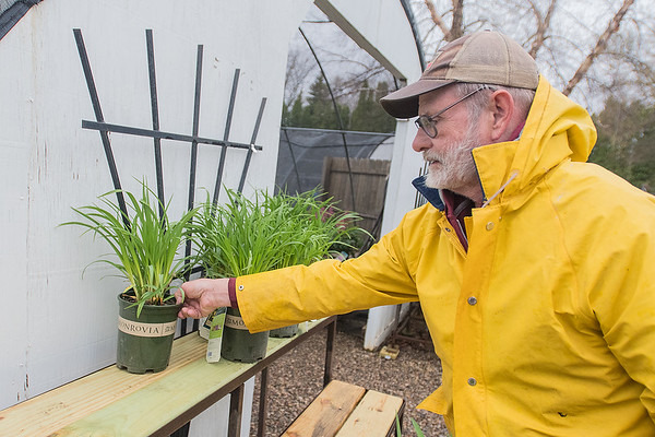 Roger Engleson puts grasses on a shelf outside of a greenhouse at Edenvale Nursery on Tuesday. Photo by Jackson Forderer