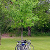 Bicycles rest against a tree in Red Jacket Trail Park Saturday.