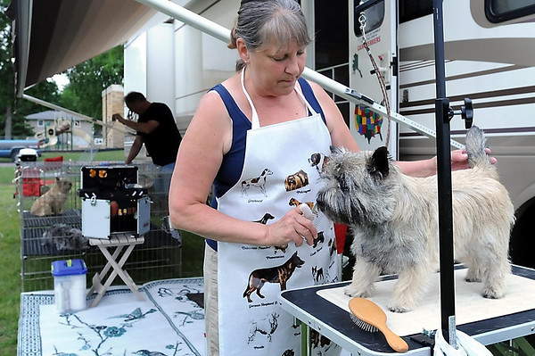 John Cross<br /> Theresa Radomski of Apple Valley grooms her Cairn terrier, Jewel, in preparation for showing the dog at the Key City Kennel Club's All Breed Dog Show.