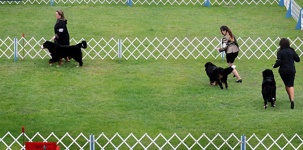 John Cross<br /> Dog owners put their canines through the paces for the judges this weekend at the Key City Kennel Club All Breed Dog Show at the Nicollet County Fairgrounds in St. Peter.