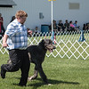 Dog Show Fourth