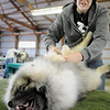 Life is good for Trek, a Keeshond, as it enjoys the attention of its owner, Susan Larson of Lakeville, as she prepares it for showing at the Key City Kennel Club All Breed Dog Show in St. Peter on Saturday. John Cross Photo