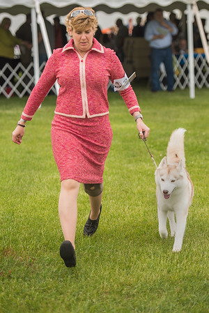 Key City Kennel Club Dog Show 1