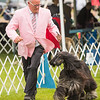 Key City Kennel Club Dog Show 3
