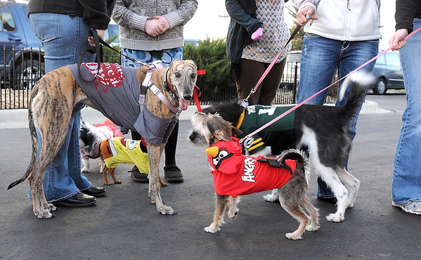 Dogs dressed for Halloween wait in line with their owners before the Pet Expo Halloween Party at The Paw in Mankato.