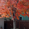 Pat Christman<br /> Brightly colored leaves fall from a North Mankato tree.