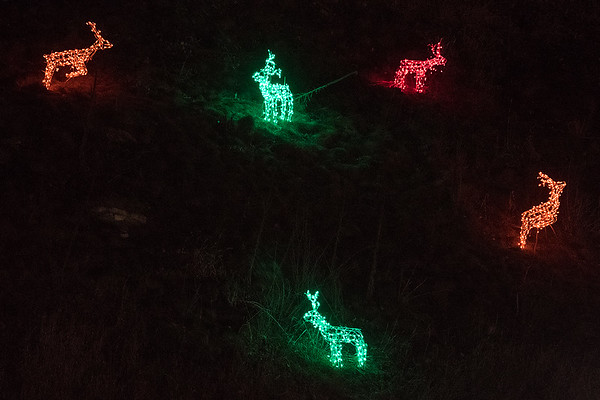 Deer on the hill at Sibley Park are a new feature at this year's Kiwanis Holiday Lights. Photo by Jackson Forderer