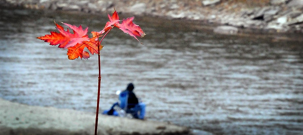 John Cross<br /> A last gasp of colorful fall foliage frames a fisherman on an otherwise gray Monday as he fishes on the Minnesota River.