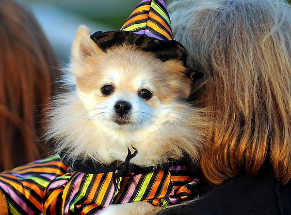 Rosie sits atop her owner Sandy Malkow's shoulder while on their way in to the Pet Expo Halloween Party at The Paw Tuesday.