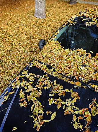 John Cross<br /> The first hard freeze of the season Tuesday morning had motorists scraping frosty windows. The overnight temperatures that fell into in the mid-20s also brought on a colorful deluge of falling leaves that coated cars and sidewalks.