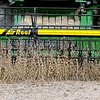 Soybean harvest 4