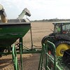 Soybean harvest 5
