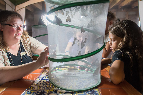 Becky Pollack, left, makes a small gap for Ryder Judish (behind netting), 6, to put a tagged monarch butterfly into a holding net with other tagged monarchs as Milana Reeves (right), 9, watches at the Ney Nature Center. The fourth generation of monarchs will live six to nine months, which allows them to winter in Mexico. Photo by Jackson Forderer