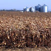 A field of corn blows in the wind Tuesday near St. Peter.