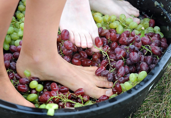 Pat Christman<br /> A tub full of grapes gets pulverized into juice by two pairs of feet Saturday.