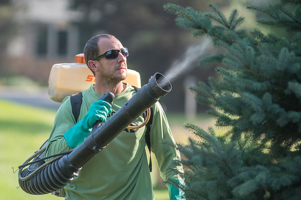 Jason Quint, owner of Mosuito Squad, sprays a tree for mosquitoes on Thursday in North Mankato. Quint said that any mosquito that comes into contact with the application within three weeks will die. Photo by Jackson Forderer